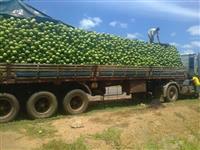 Centro de Distribuição de Côco Verde em Goiânia