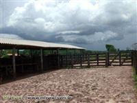 ,Fazenda ótima para pecuária