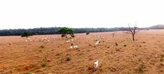 Fazenda em Barra do Garças MT