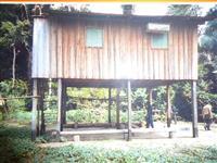Vendo Fazenda coberta por floresta nativa da amazônia, cheia de madeira de lei