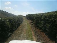 Fazenda Carmo de Minas