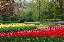Flora Jardim e Serviços