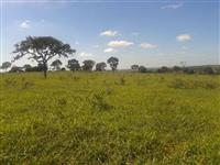 Fazenda Antas e Timbó