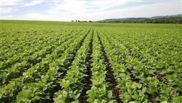 Fazenda com área de 250 alqueires na região de Ponta Grossa-PR