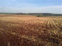 Fazenda com 100 alqueires (242 hectares) plantando 80% da área