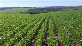 Fazenda com 160 alqueires com 60 alqueires plantando e potencial de abertura de mais 50 alqueires