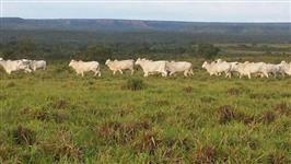 Fazenda com 7000 hectares no Sul do Tocantins (pronta e faturando). Porteira fechada