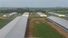 Ótima granja para engorda de aves