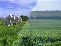 Vendo Fazendas para Lavoura e Pecuária no estado de Rondônia