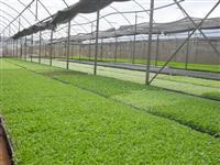 Substrato Agrícola  - Convencional e Orgânico