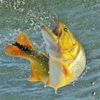 Hormônio Feromônio Para Massa De Pesca Água Doce