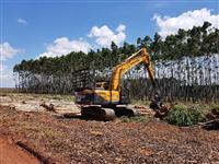 Maquina Florestal Harvester
