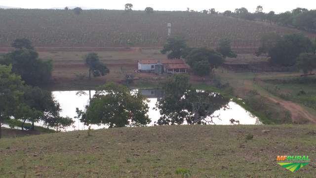 Fazenda Sucuri - 11,5 alqueires.