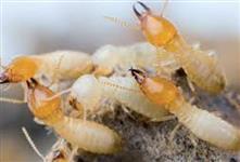 INSETYL - Inseticida sistêmico elimina colônia inteira de Formigas, Cupins e Baratas Não tóxico