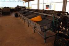 Máquina Beneficiadora de Laranja - 8 ton/h