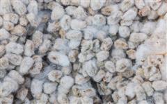 Casquinha de Soja, Farelo de soja, algodão, milho, sorgo, sal