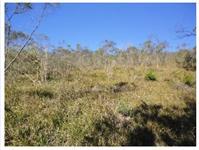 Três hectares de terra em Veranópolis-Serra Gaúcha/RS Terra da longevidade!