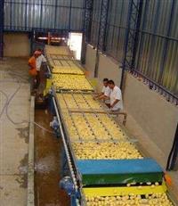 Máquinas e equipamentos para beneficiamento e classificação de legumes e frutas