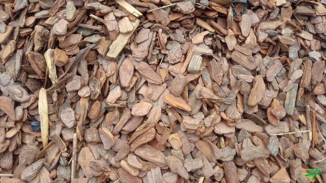 Casca de pinus embalada .ótima qualidade.