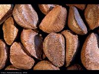 Compro Castanha do Pará com casca