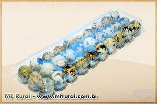 Embalagem plástica transparente para 30 ovos de Codorna