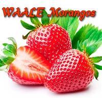 WAALE Morangos