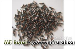 Microchip Animal