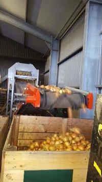 Cebola importada holandesa, altíssima qualidade e diversos calibres. Todas padrão