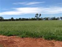 Excelente Fazenda no Município de Nova Andradina/MS