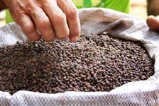 Vendo 10 toneladas de Pimenta do reino tipo exportação