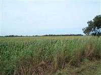 Fazenda c/1450 hectares ótima para soja na Barra do Ouro - Tocantins.