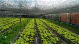 Tela Agrícola Sombreamento 50%