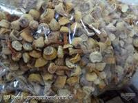 Cogumelo Agaricus Blazei, direto do Produtor