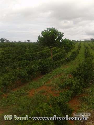 fazenda cafeeira em Bonito Ba