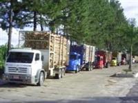 Contrato transportadores de eucalipto