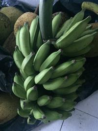 Vendo banana e mudas de banana