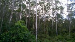 Venda de Floresta
