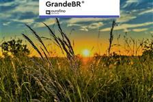 GRANDE BR - CLOMAZONE 500