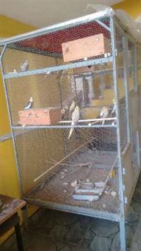 """Viveiro- """"Grande"""" (pássaros pequenos ou grandes) + 12 calopsitas- diversas cores"""