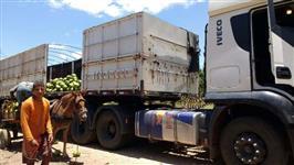 Vendo e Distribuo Coco Verde Para Todo Brasil
