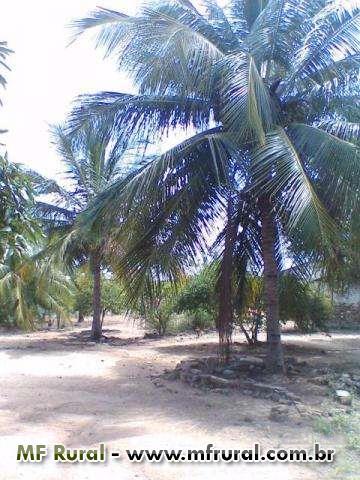 Fazenda Santa Maria - Delmiro Gouveia