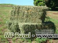 Fazenda para arrendar ou alugar: PROCURO