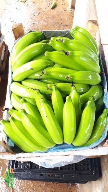 Compra e venda de banana