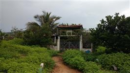 Fazenda Oiticica - Itapajé-CE
