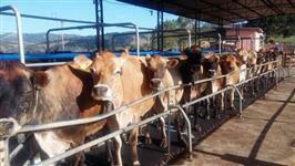 Compro Fazendas leiteiras de gado