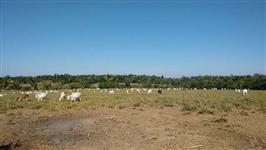 Fazenda em Juína