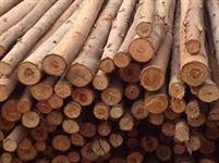 Madeira para Exportacao: Eucalipto, Pinus e outras / em torra ou serrada