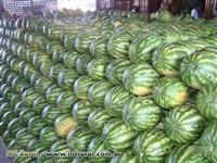 compra e venda de melancia
