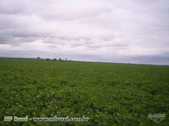Fazenda em Tapira - PR