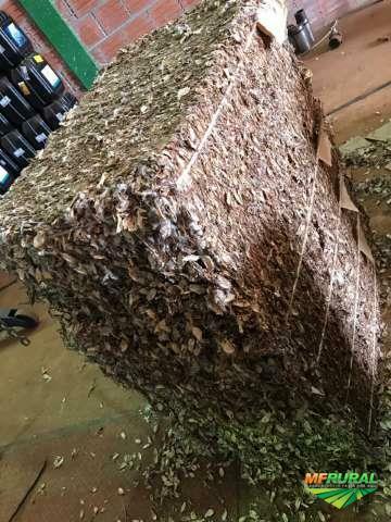 Capulho de algodão prensado